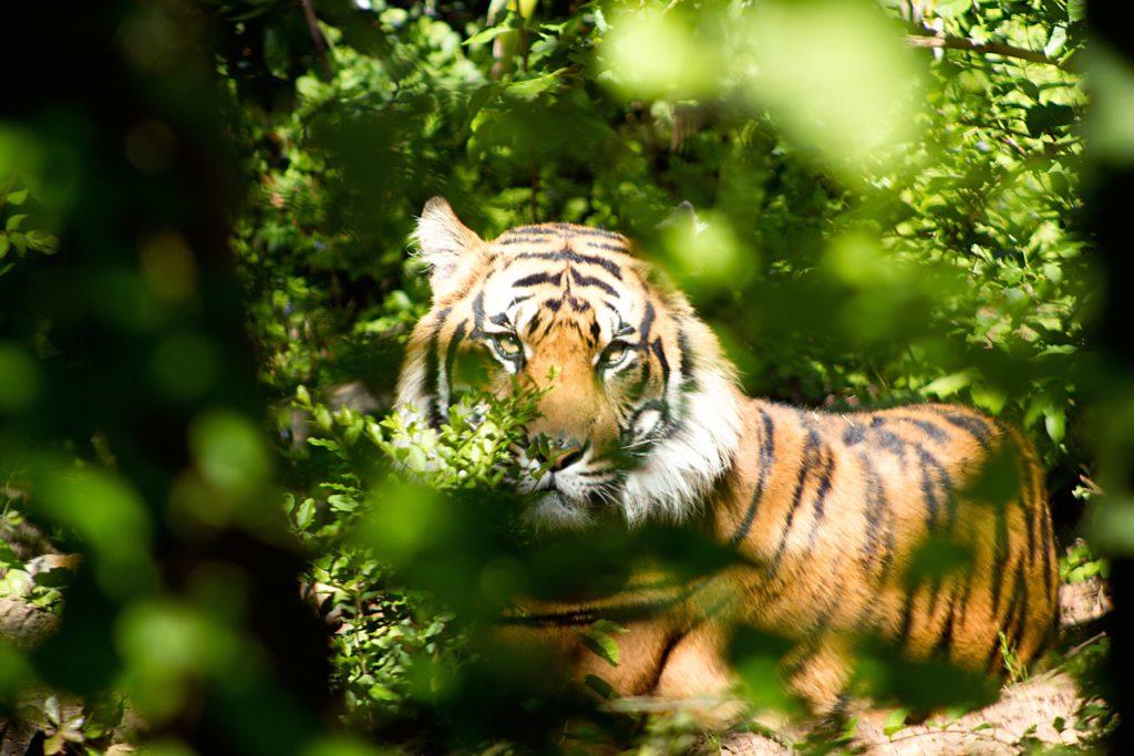 Donación millonaria para las selvas