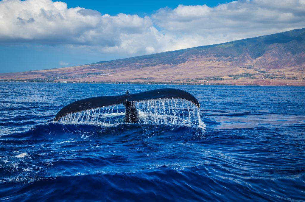 ritmo cardíaco de una ballena azul