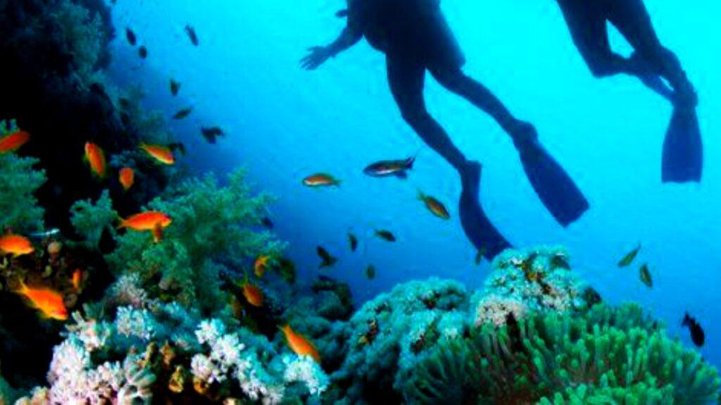 Buzos en Jamaica reviven arrecifes de coral