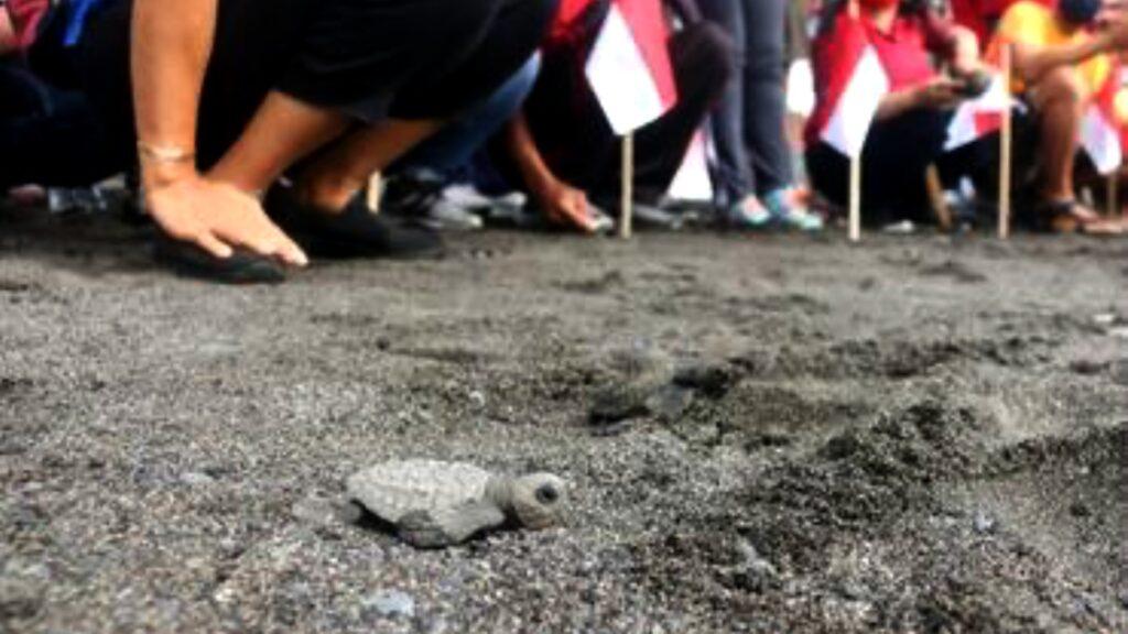 Tortugas bebés prueban por primera vez el mar