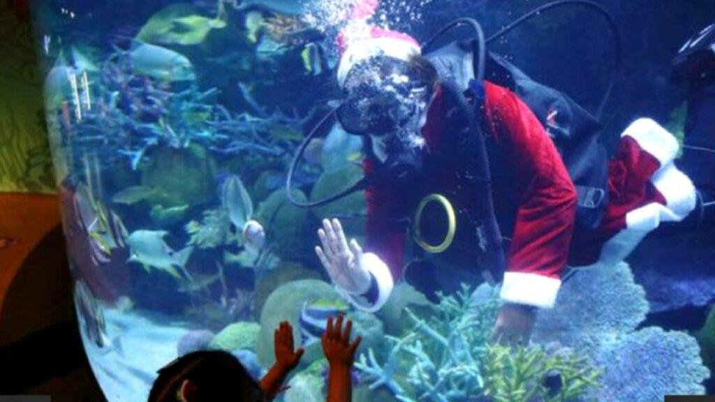 Santa Claus se sumerge con los peces en acuario