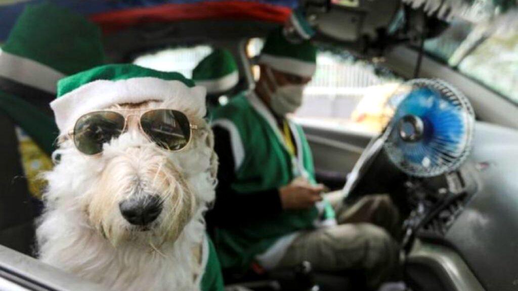 Taxista y Santa Claus canino recorren capital de Colombia