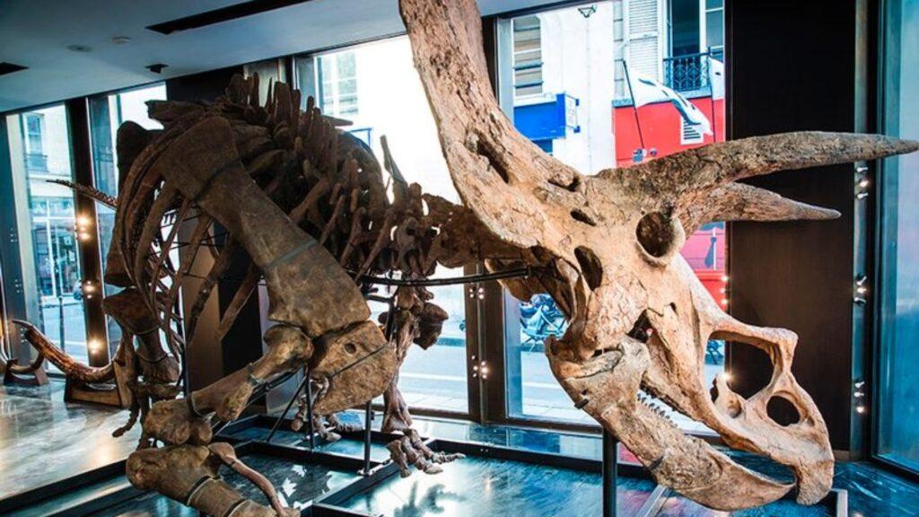 Esqueleto de triceratops será subastado en París